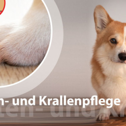 Pfoten- und Krallenpflege beim Hund – entspannt dremeln | Schritt für Schritt