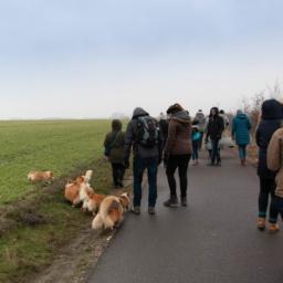 "Die Corgi-Gang auf ""Winterspaziergang"""