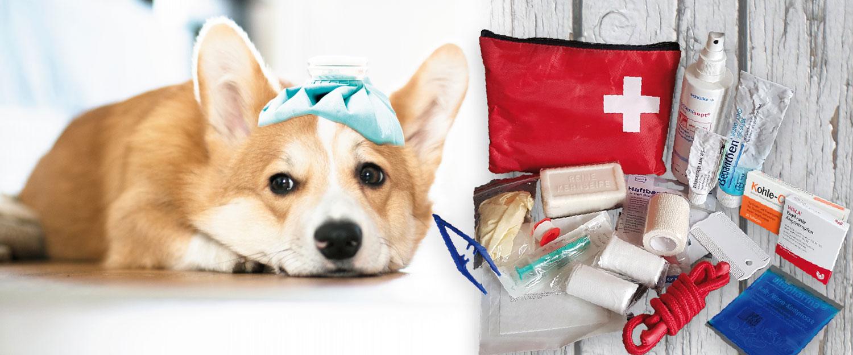 Notfallapotheke für den Hund