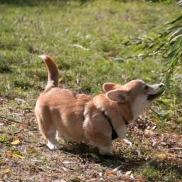 Impulstraining – Ein Welpe zieht ein